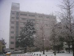 20050305_2.jpg